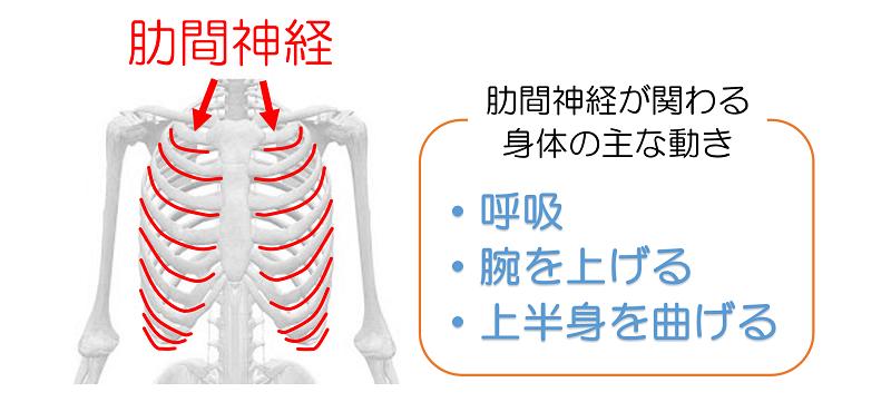 神経痛 チェック 肋間